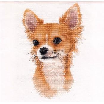 Pequeño Amigo Chihuahua