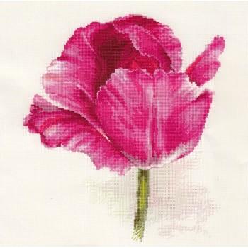 Tulipán en Carmesí