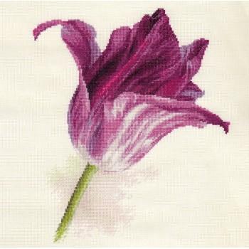 Tulipán Terciopelo Lila