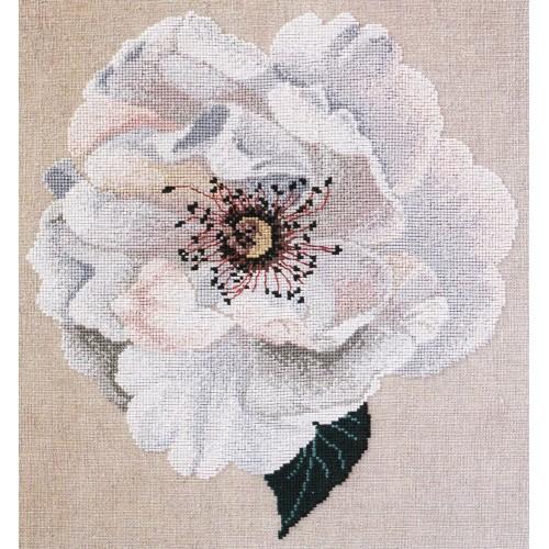 Rosa de Viña