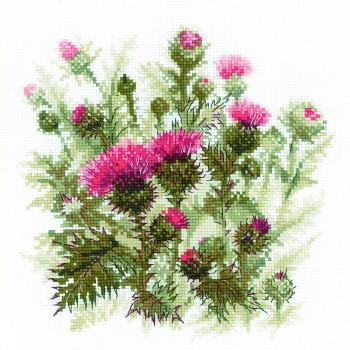 Flores de Cardo Riolis 1852 Thistle