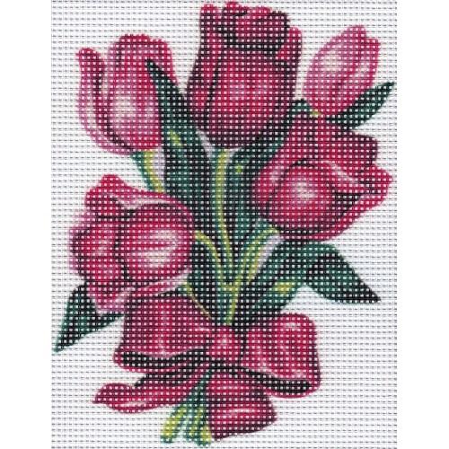 Tulipanes (NP)