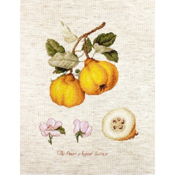 Membrillo Luca-S BA22430 Pear Shaped Quince