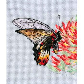 Mariposa en la Flor RTO M755 Nectar for Butterfly