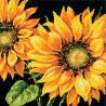 Girasol Espectacular (NP) Dimensions D71-20083 Dramatic Sunflower