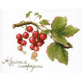 Grosellas Rojas MP Studia HB-695 Gifts of Nature Red Currant
