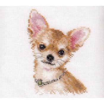 Chihuahua Alisa 1-30