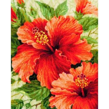 Hibiscus RIOLIS 1967