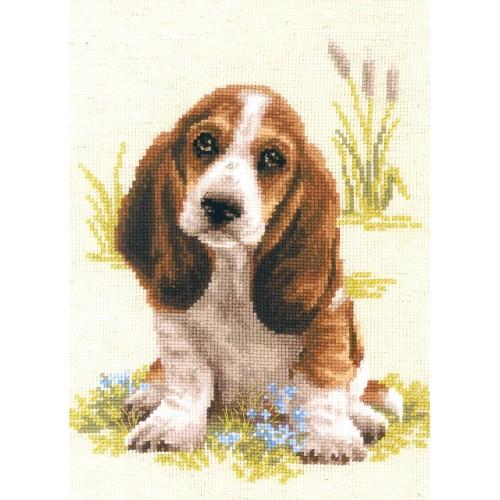 Cachorro de Basset Hound