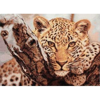 Leopardo en la Rama