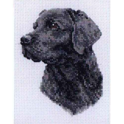 Retrato de Labrador Negro